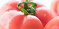 須賀農園のトマト