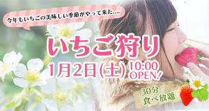 いちご狩りは1月2日(土)、10:00からオープンします!
